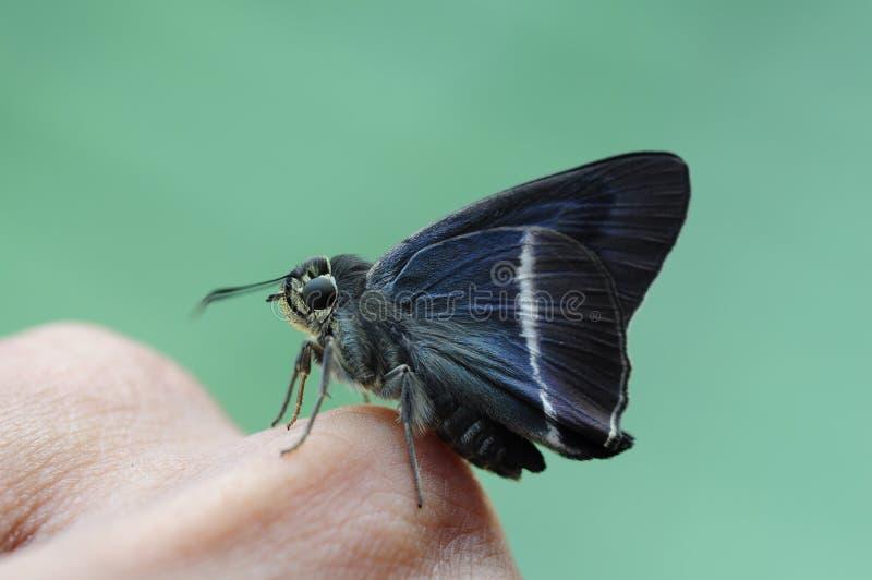 Chiuda sulla piccola farfalla fotografie stock libere da diritti