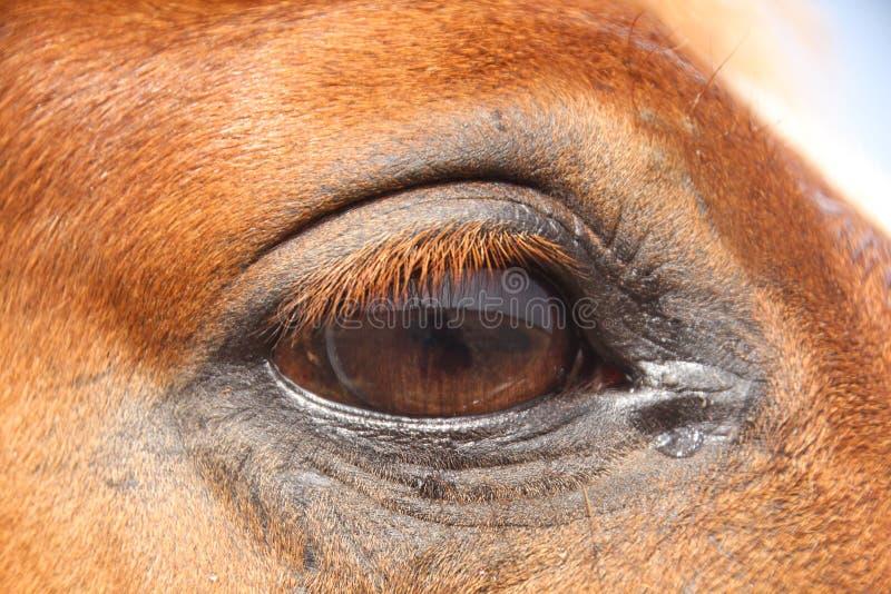 Chiuda sulla vista di un occhio rosso del cavallo il giorno soleggiato fotografie stock libere da diritti