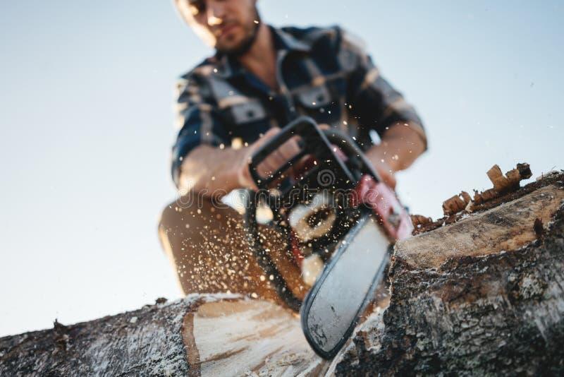 Chiuda sulla vista sull'albero d'uso di sawing della camicia di plaid del forte boscaiolo barbuto con la motosega per lavoro sull immagine stock