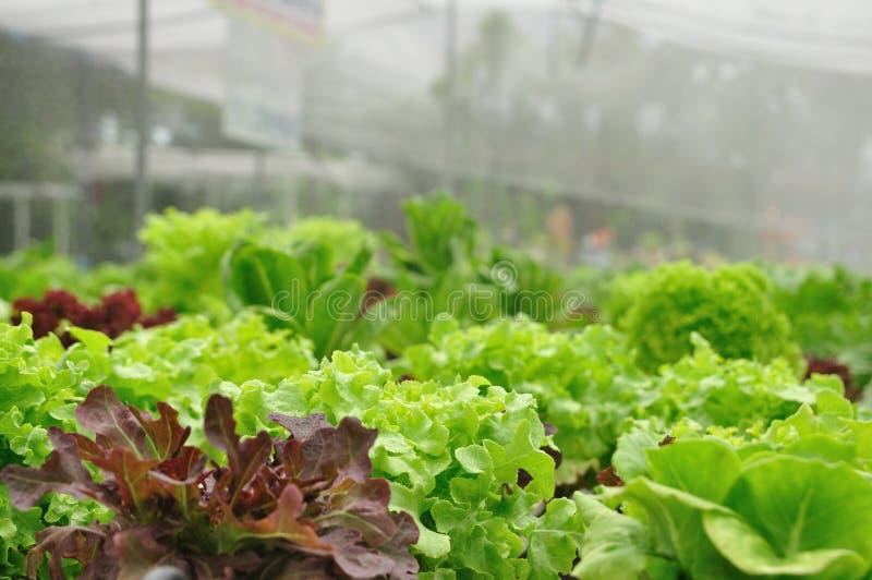 Chiuda sulle aziende agricole di verdure organiche, alimento pulito. immagini stock