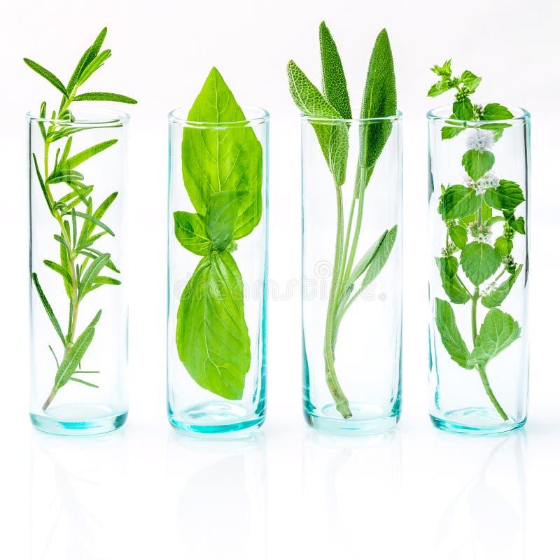 Chiuda sulle bottiglie degli oli essenziali con le erbe fresche La salvia, è aumentato fotografia stock