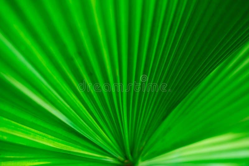 Chiuda sulle foglie il primo piano di struttura che offusca morbidamente fotografia stock libera da diritti