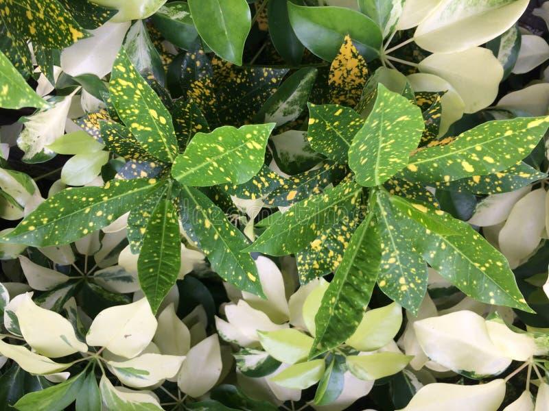Chiuda sulle foglie verdi fotografia stock libera da diritti