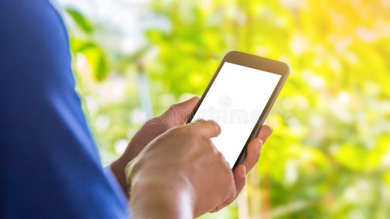 Chiuda sulle mani del maschio che tengono lo schermo bianco del telefono con fondo confuso verde fotografia stock