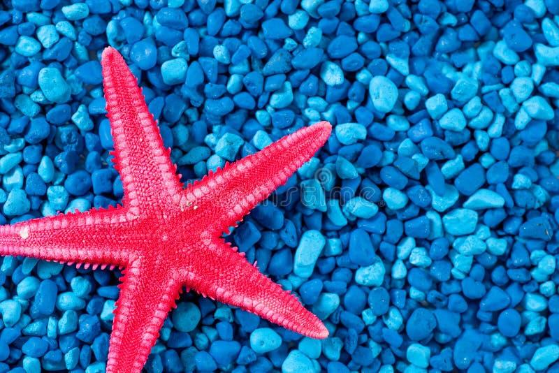 Chiuda sulle stelle marine rosse su fondo blu fotografie stock