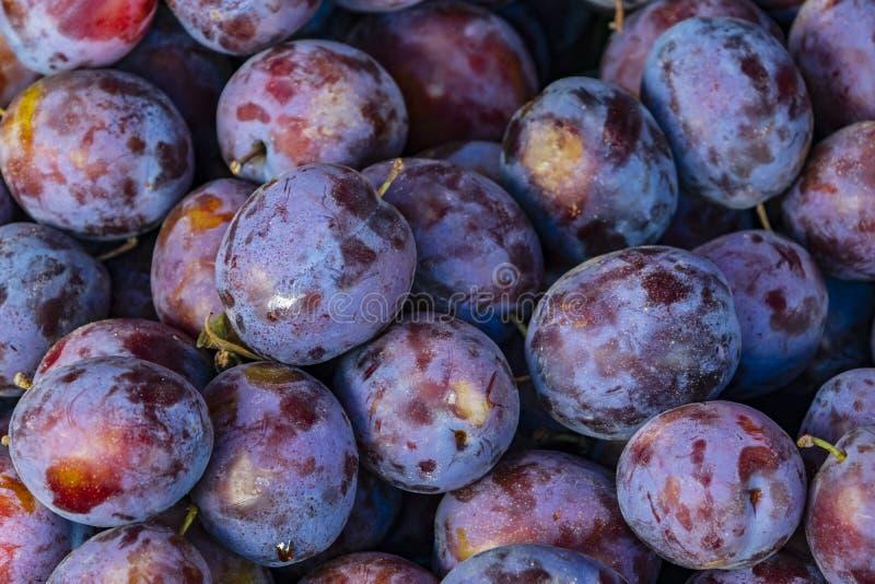 chiuda sulle susine selvatiche piccola frutta plumlike porpora-nera immagine stock