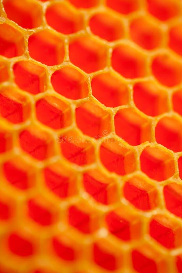 Chiuda sullo studio sparato di miele organico autentico in favo - il cibo sano fotografia stock