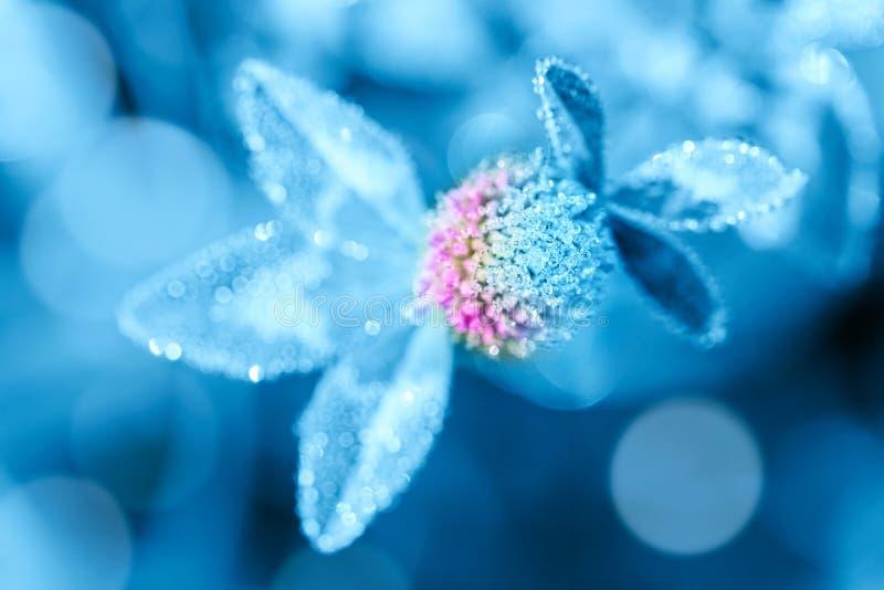 Chiudere l'immagine macro di rugiada o raindrop su fiore di trifoglio Foreste estali fantastiche sottofondo naturale Tonato immagini stock libere da diritti