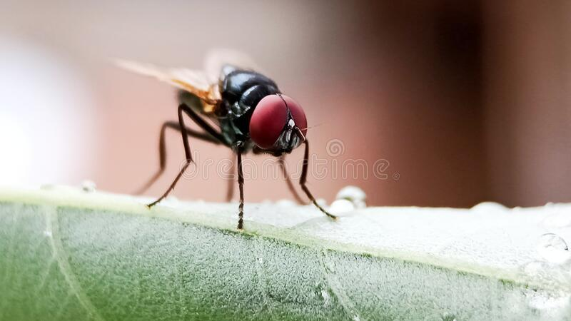 Chiudi di mosche sulla foglia fotografia stock libera da diritti