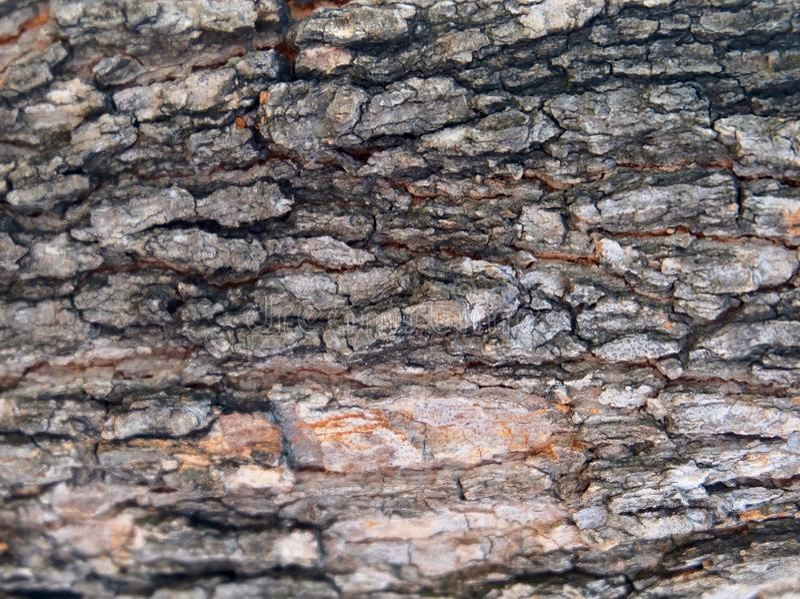 Chiuso su di struttura orizzontale della corteccia di albero immagine stock