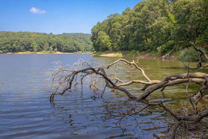 Chiusura dal bordo del lago Ecco e#x27;è un albero caduto nell'acqua fotografie stock