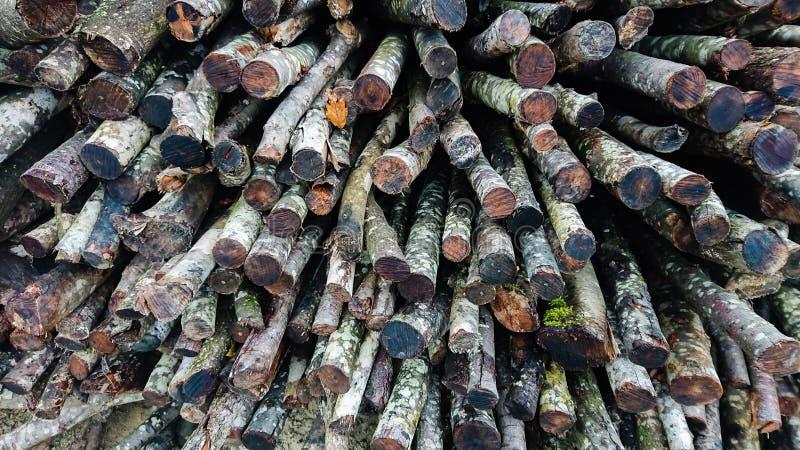 Chiusura dei tronchi di Firewood invernali fotografia stock libera da diritti