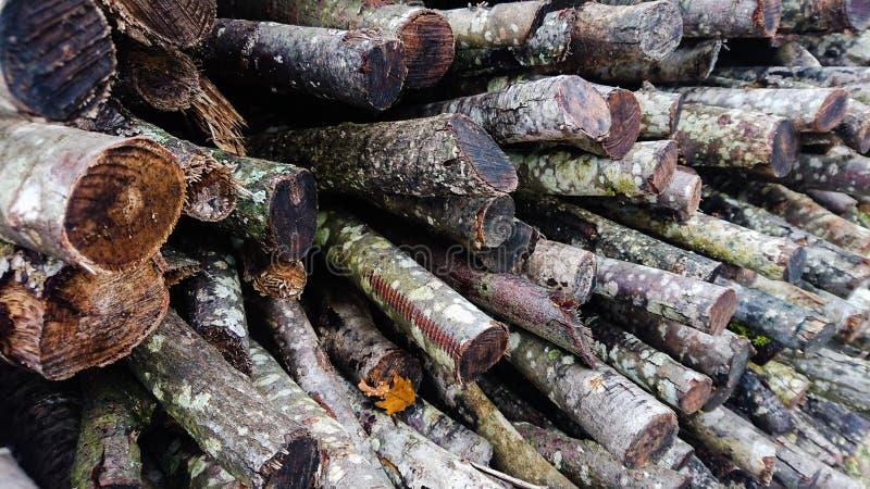 Chiusura dei tronchi di Firewood invernali immagini stock