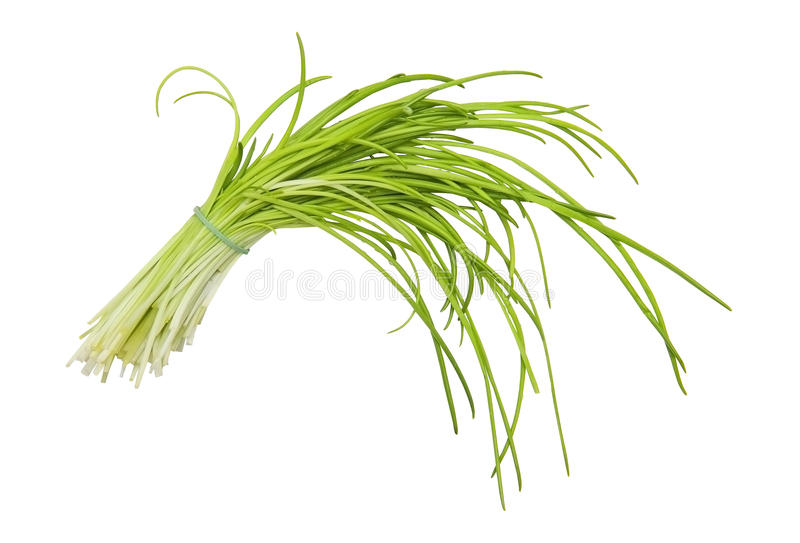 Chive. Isolated on the white background royalty free stock photos
