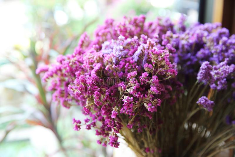 Chive purple plant. In close up stock photo
