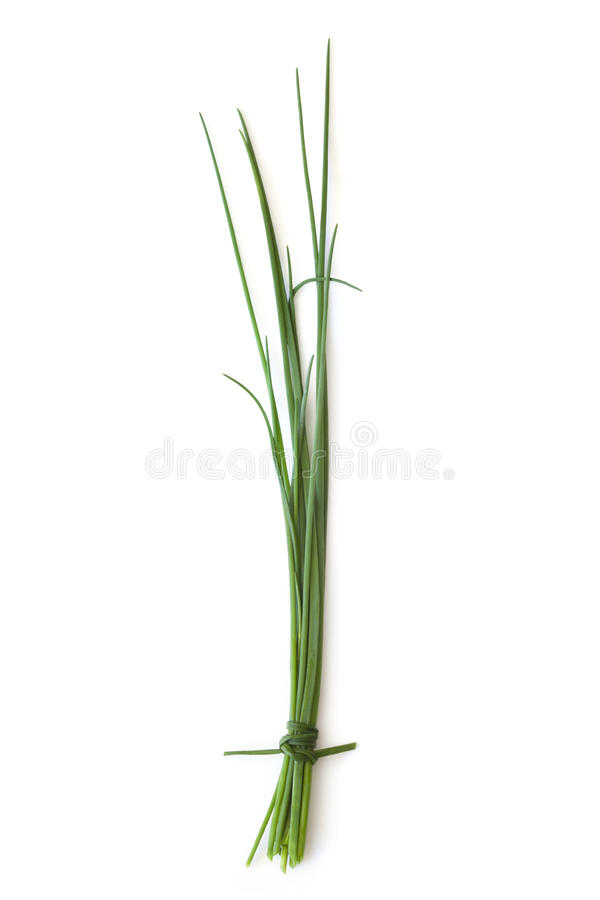 Download Chives stock photo. Image of ingredient, bunch, tied - 23407894