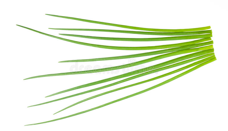 Download Chives bunch stock image. Image of chive, eating, diet - 23978735