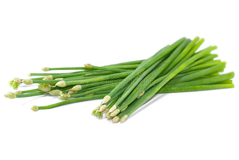 Chives flower or Chinese Chive isolated cut out on white. Background royalty free stock photos