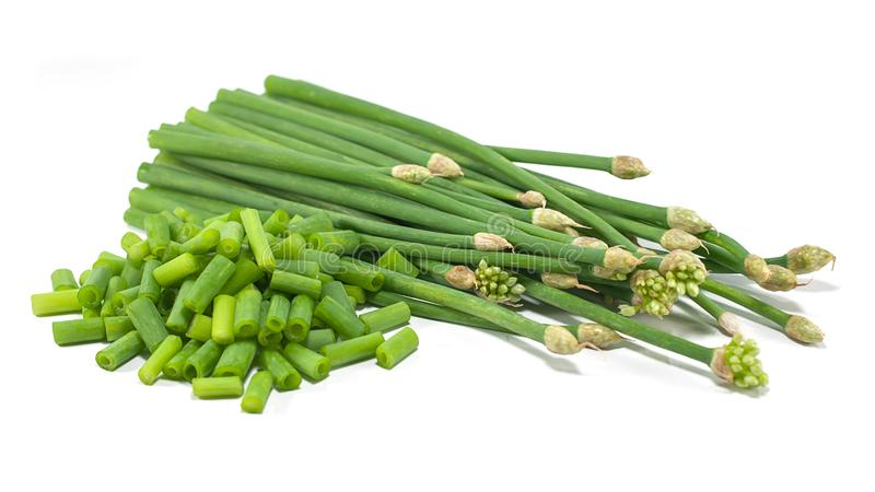 Chives flower or Chinese Chive isolated cut out on white. Background royalty free stock photography