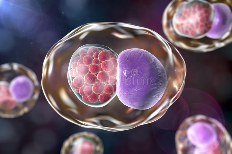 Chlamydia inclusion in human cell stock illustration