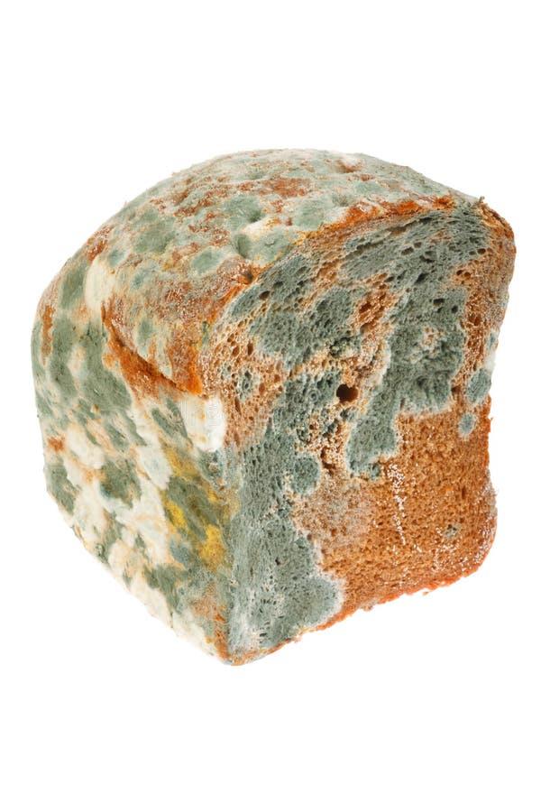 chlebowy spleśniały obraz stock