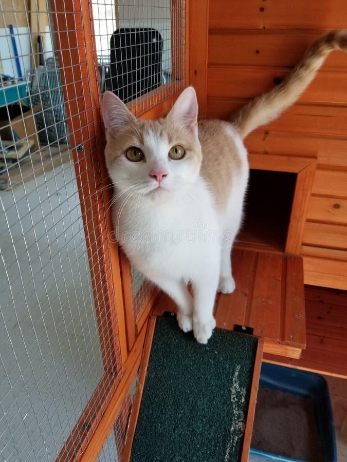 Chloe de Kat stock afbeeldingen