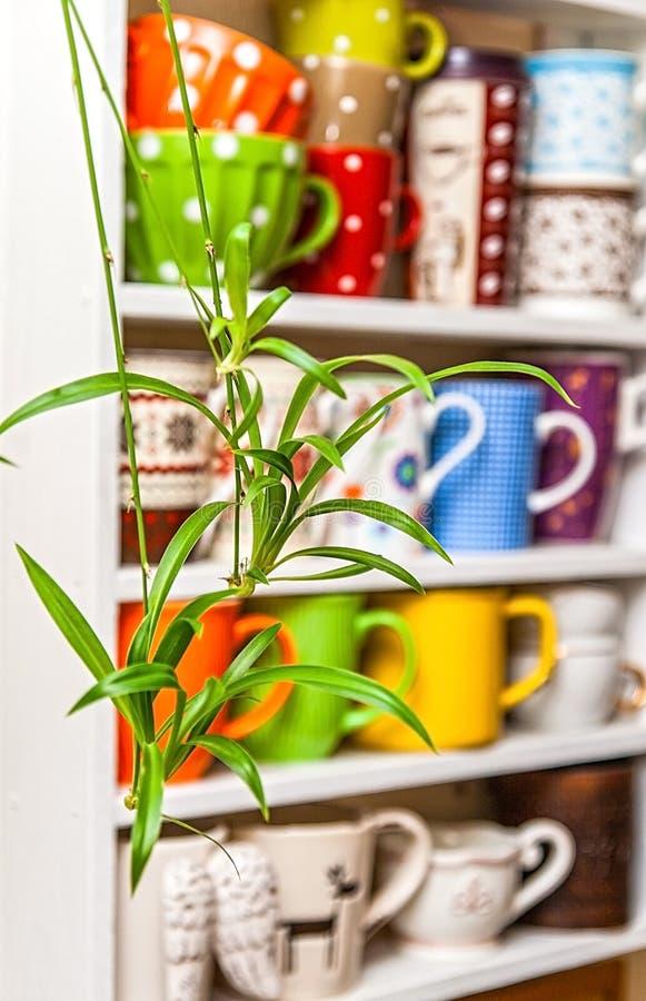 Chlorophytum op de achtergrond van planken met kleurrijke koppen stock foto