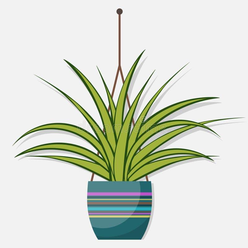 Chlorophytum, usine plate de pièce de style dans le pot, illustration illustration libre de droits