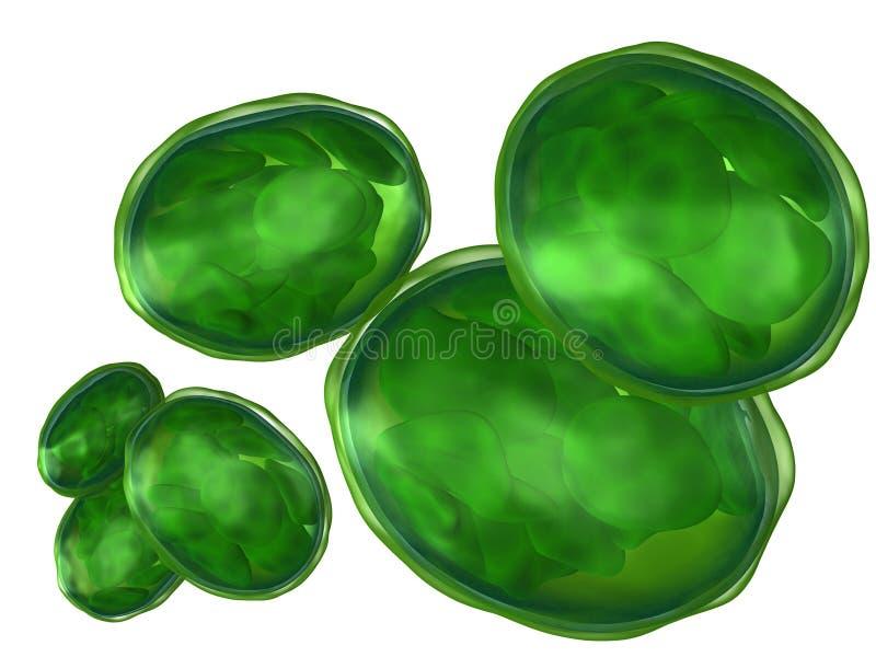Chloroplasts isolated on white. 3d rendered set of plant organelle chloroplast isolated on white royalty free illustration
