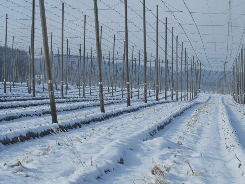 Chmiel pola dla piwa w wintertime zdjęcie stock