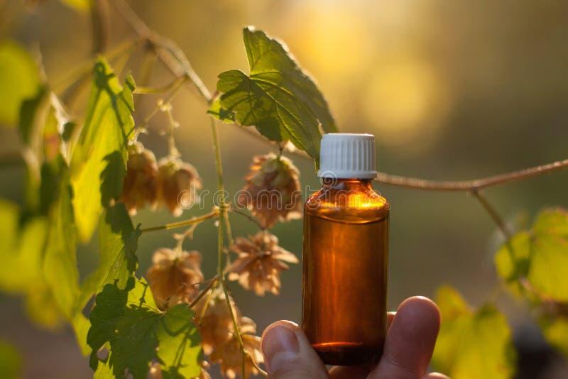 Chmielu humulus istotnego oleju zdroju ziołolecznictwa suchy zielarski aromatherapy z kopii przestrzenią fotografia stock