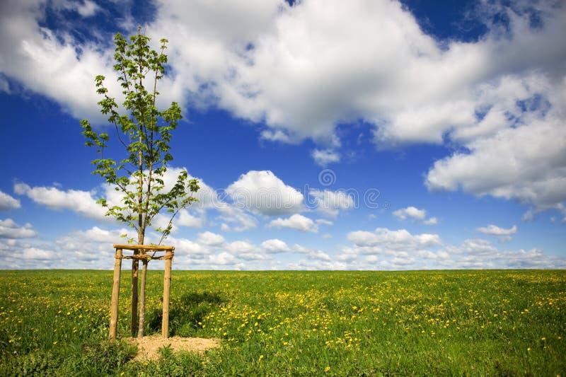 Download Chmur Pola Grass Nieba Drzewa Potomstwa Obraz Stock - Obraz złożonej z chmury, potomstwa: 13327667