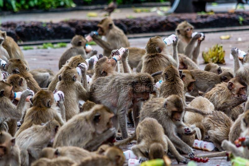 Chmura małpi napoju mleko, Lopburi Tajlandia obrazy stock
