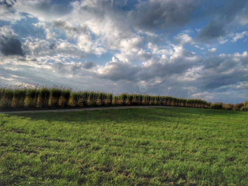 Chmurne trawy zdjęcie royalty free