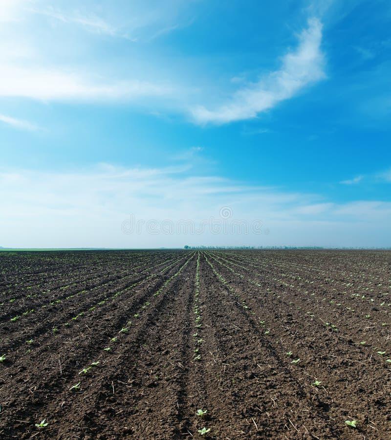 Download Chmurnego Nieba I Wiosny Pole Zdjęcie Stock - Obraz złożonej z przyrost, fielder: 28953716