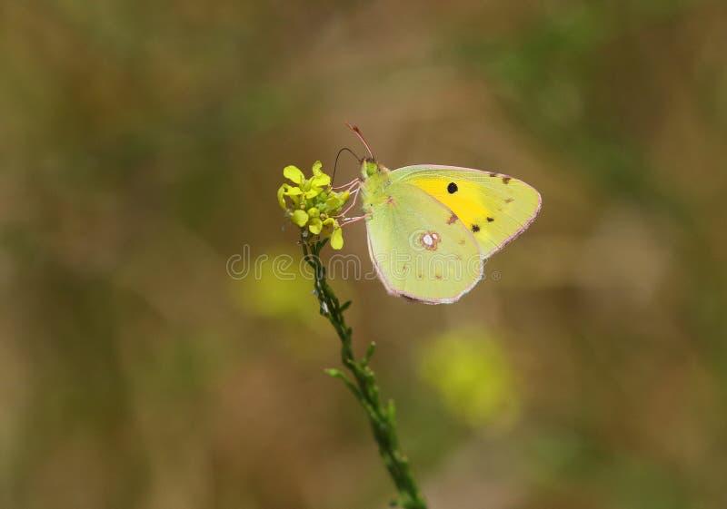 chmurniejący kolor żółty zdjęcie royalty free