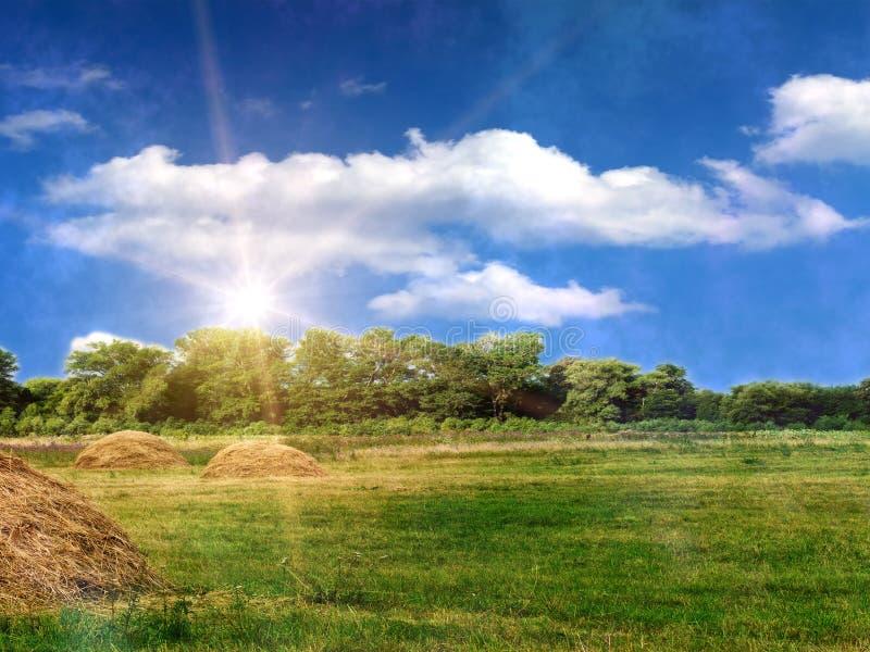 chmurnieje nieba drewno zdjęcia stock