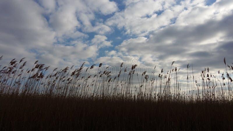 Chmurnieje niebieskiego nieba fild obrazy stock