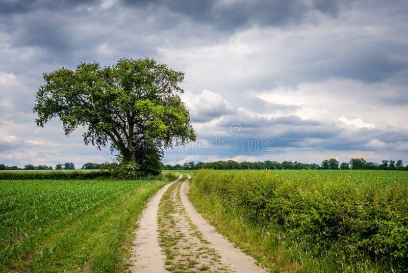 Chmurny Holenderski lato krajobraz w Czerwu blisko Delden Twente, Overijssel obraz royalty free
