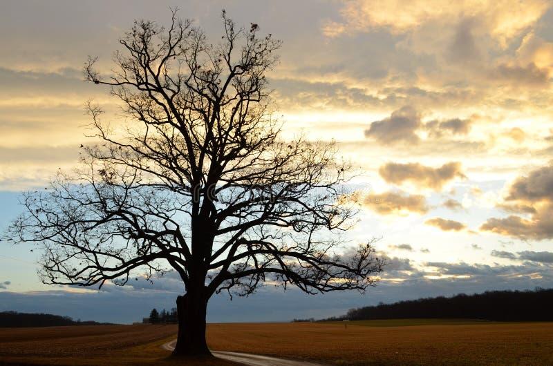 Chmurny wschód słońca z sylwetką Wielki stary dębowy drzewo wzdłuż rolnej przejażdżki na nagim zima ranku obrazy royalty free