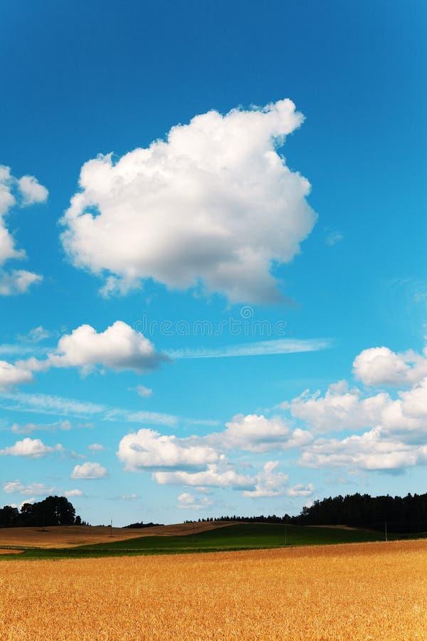 Chmury. obraz stock