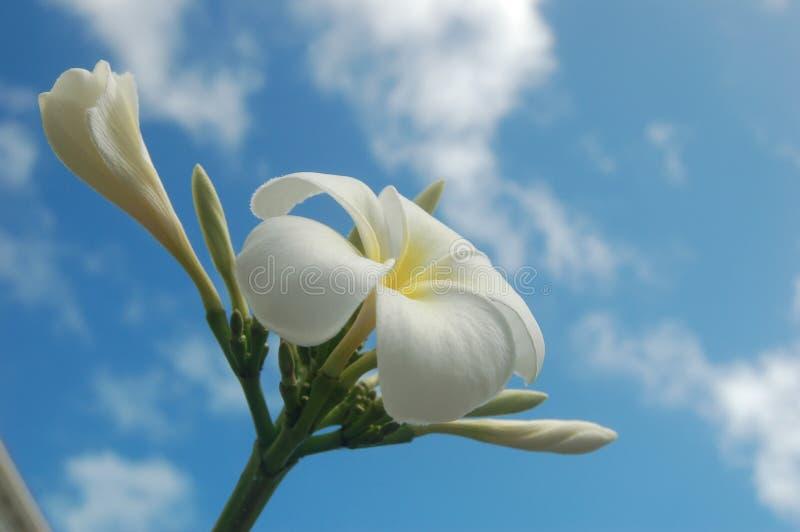 chmury kwitną tropikalnego fotografia royalty free
