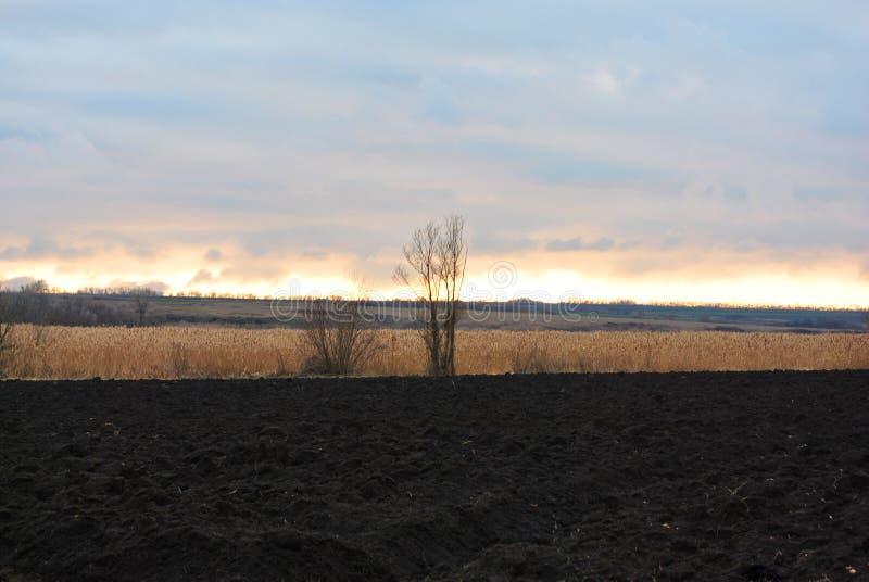 Chmury na horyzoncie w ostatnich promieniach położenia słońce nad suchymi płochami, drzewami bez liści i orzącym polem, zdjęcie stock