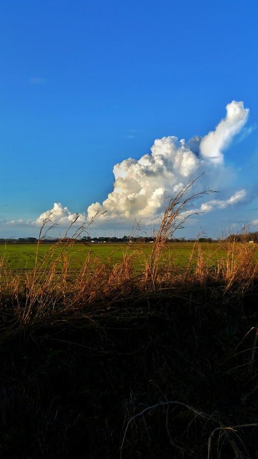Chmury nad ryżu polem fotografia stock
