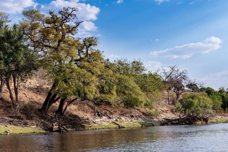 Chobe flod Botswana royaltyfri foto