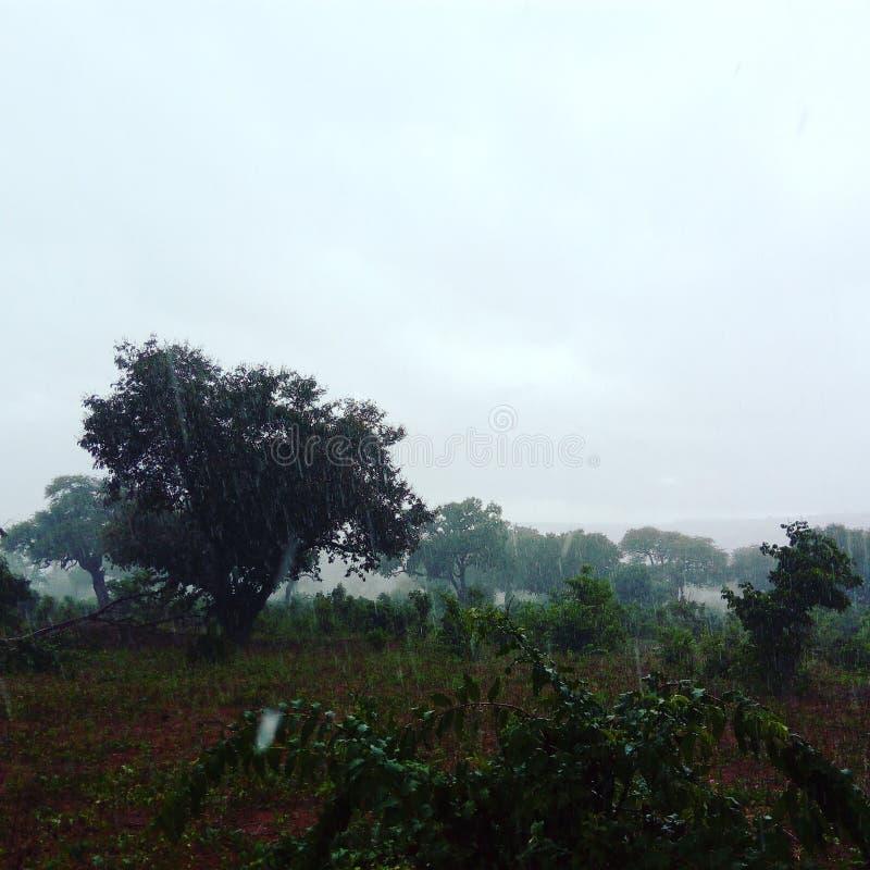 Chobe regn fotografering för bildbyråer