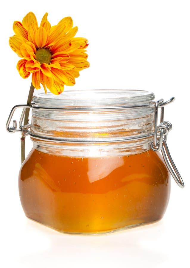 choc de honney de chrysanthemum photos libres de droits