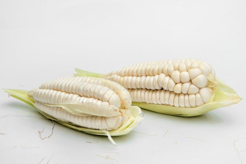 Choclo, maïs blanc géant Sur un fond blanc image libre de droits