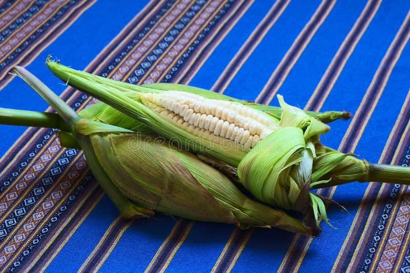 Choclo, Péruviens blancs ou maïs de Cuzco photo stock