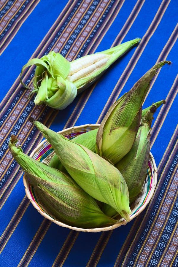 Choclo, Péruviens blancs ou maïs de Cuzco photographie stock libre de droits